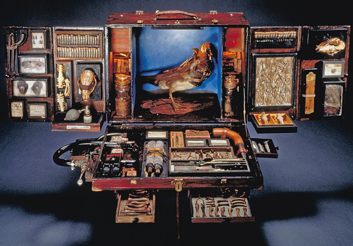 Cabinets of Curiosities | Avery Library Blog